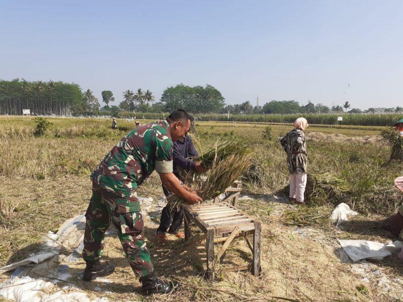 Babinsa Kelurahan Wonokoyo Dampingi Petani Tingkatkan Hasil Panen Padi
