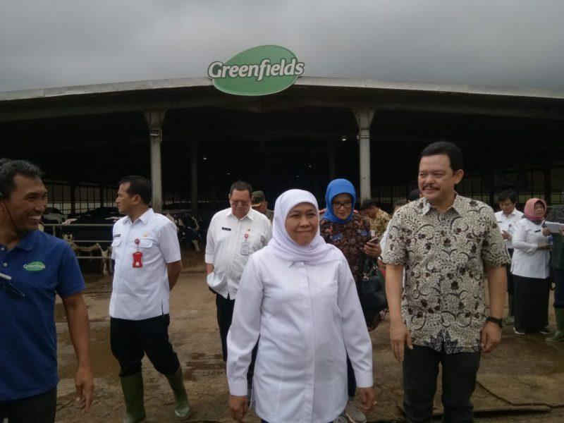 Gubernur Jawa Timur Apresiasi Peternakan Sapi Lokal Greenfields