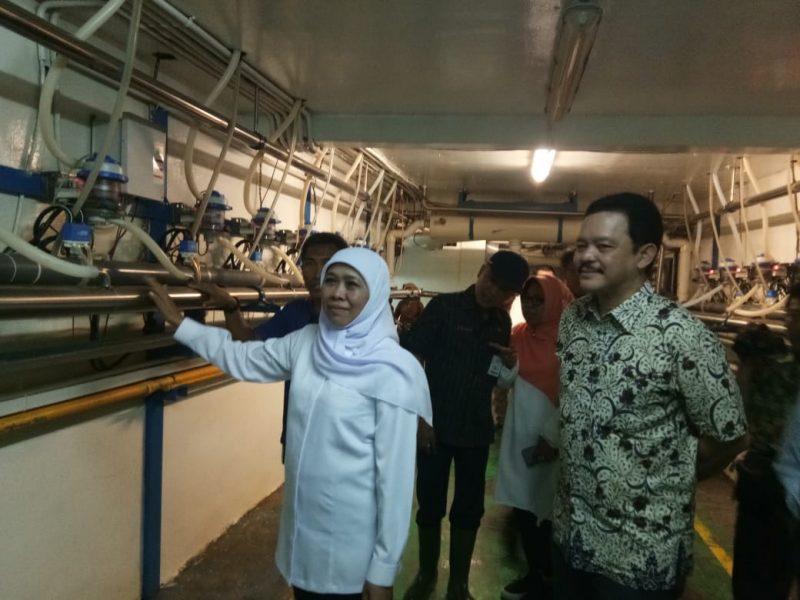 PT Greenfields Indonesia Bertekad Mewujudkan Swasembada Susu di Jawa Timur