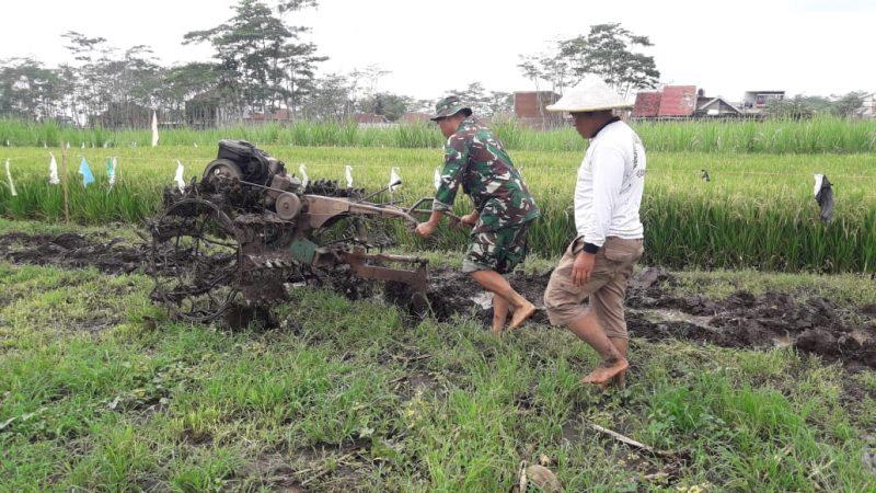 Babinsa Koramil 0833/04 Sukun Bantu Pengolahan Lahan Pertanian