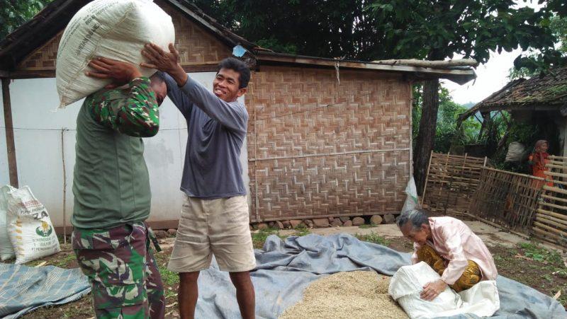 Anggota Satgas TMMD 107 Kodim 0823/Situbondo Bantu Warga Jemur Padi